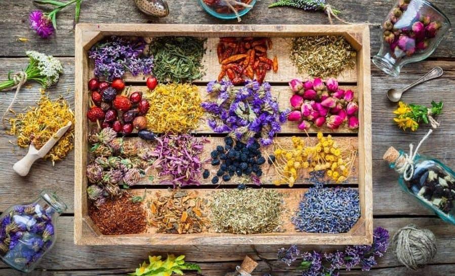 معرفی خواص و فواید ۷۰ گیاه دارویی