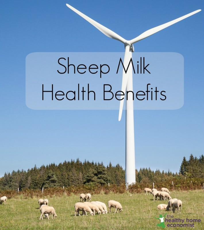 ۷ مزیت باورنکردنی شیر گوسفند که نمی دانستید!