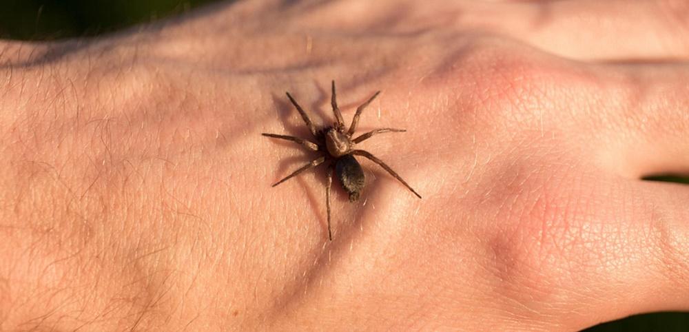 حساسیت به نیش حشرات و واکنش های آلرژیک خطرناک