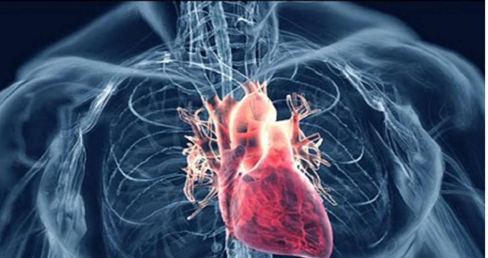 اگر به نارسایی دریچه های قلب مشکوک هستید حتما بخوانید!
