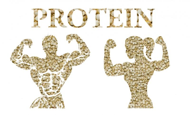 فواید مصرف پودر پروتئین گیاهیو انواع مختلف این پودرها