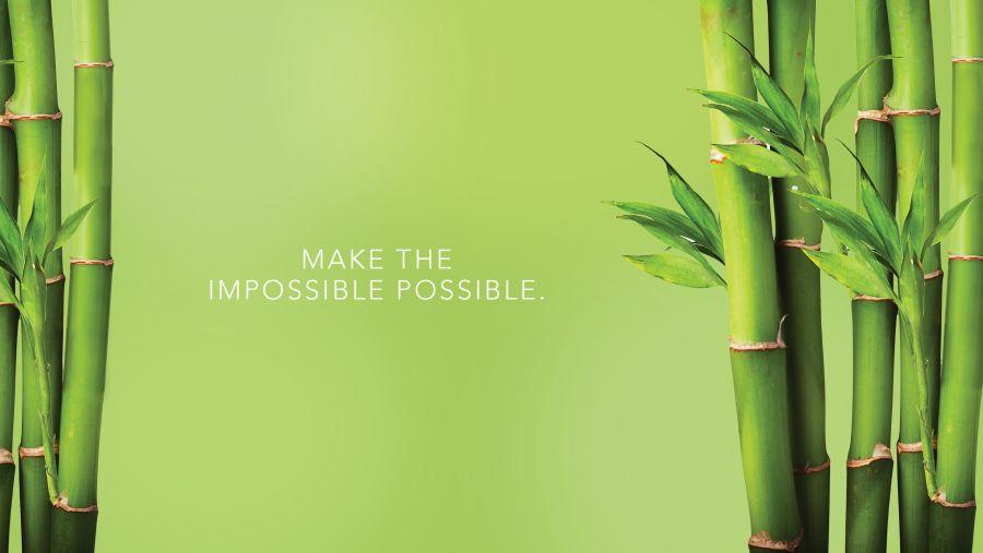 با روش کاشت و تکثیر درخت بامبو آشنا شوید