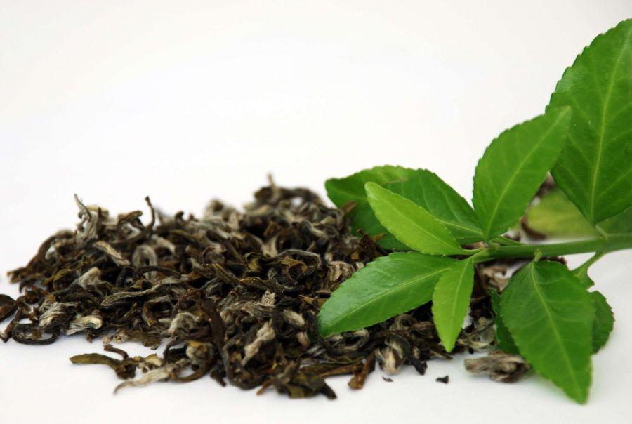 کاشت و تکثیر بوته چای در گلدان و باغچه خانه