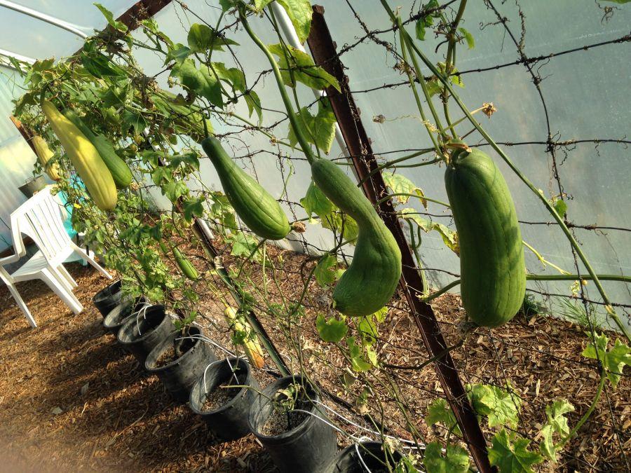 راهنمای کاشت و تکثیر گیاه لیف طبیعی