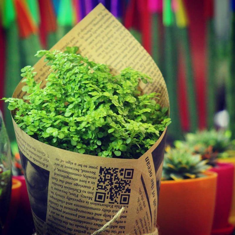 چگونه از گیاه آپارتمانی ورنا نگهداری کنیم؟