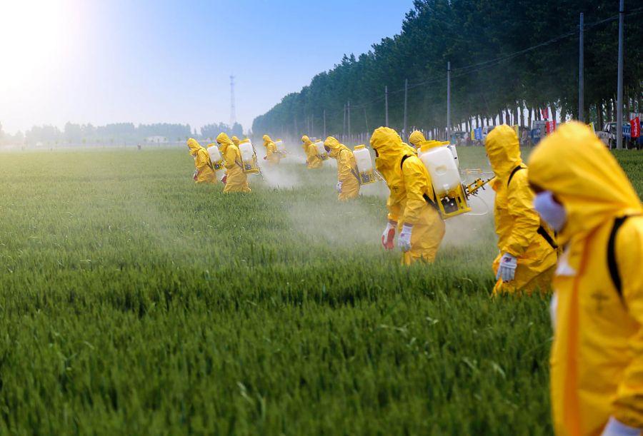 آفت کش چیست و باعث چه بیماریهایی می شود؟