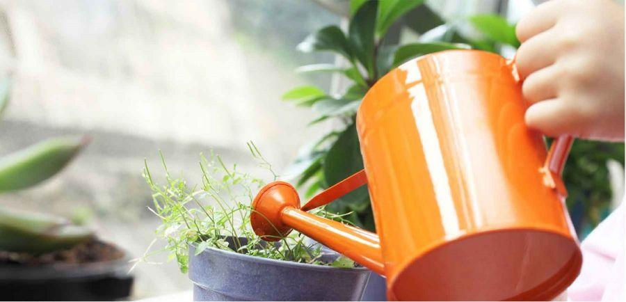 بهترین آب برای آبیاری گیاهان آپارتمانی