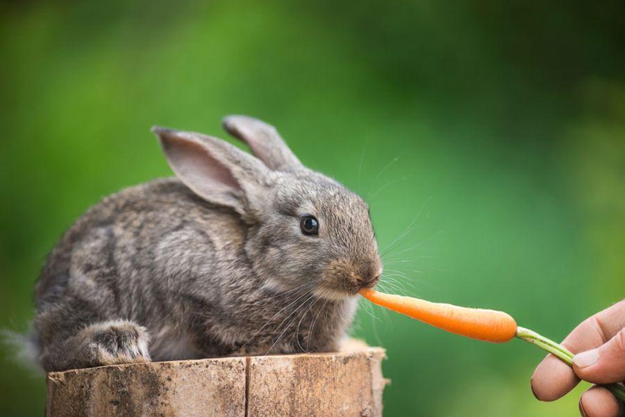 راهنمای کامل خرید خرگوش
