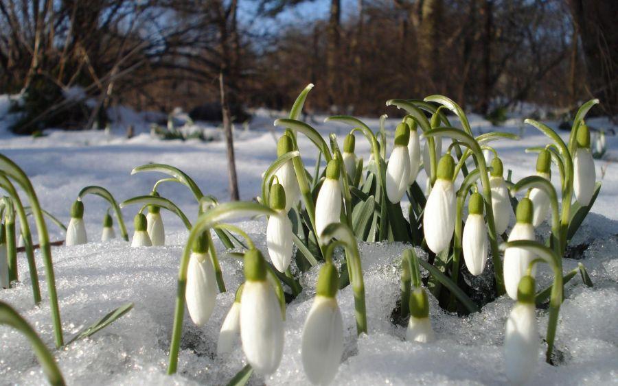 آشنایی با گیاهان مقاوم به سرما و روش نگهداری از آنها
