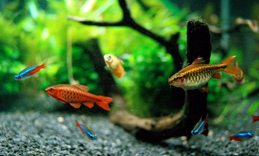 راهنمای خرید ماهی برای آکواریوم