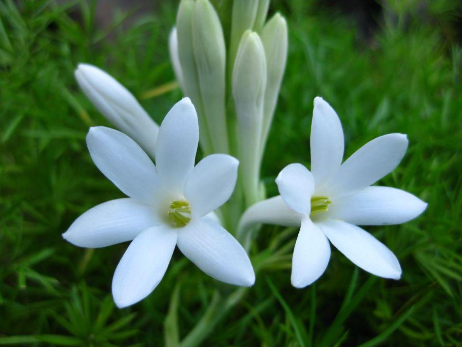 فوت و فن کاشت و نگهداری گل مریم