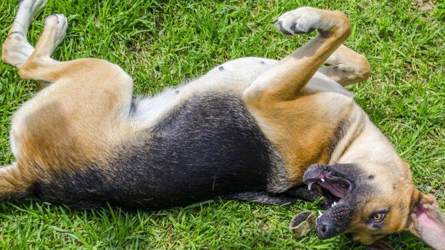 تشخیص تشنج سگ و کمک های اولیه