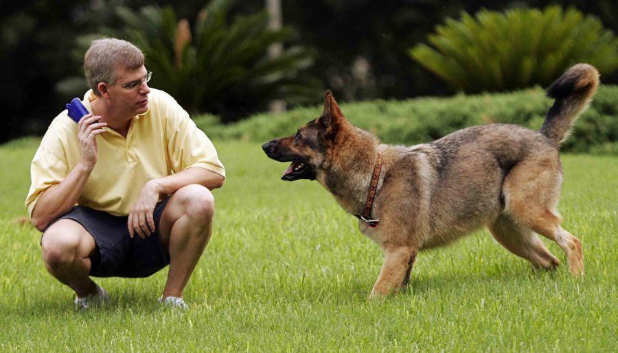 اصول تربیت سگ و ابزارهای مورد نیاز آن