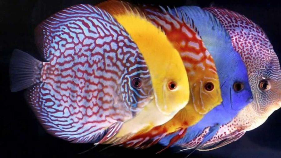 روش نگهداری از ماهی دیسکس
