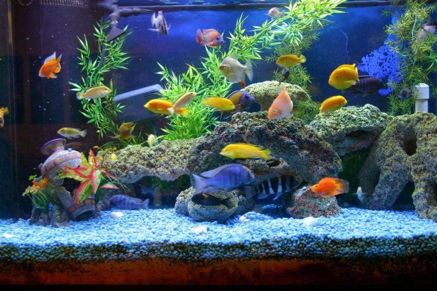 انتخاب بهترین ماهی برای آکواریوم کوچک