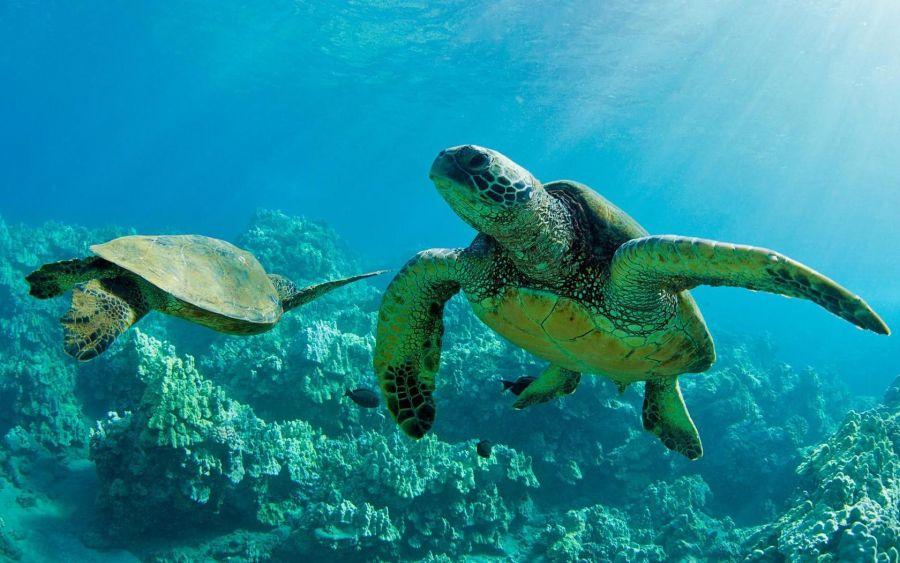 همه چیز در مورد لاک پشت های دریایی