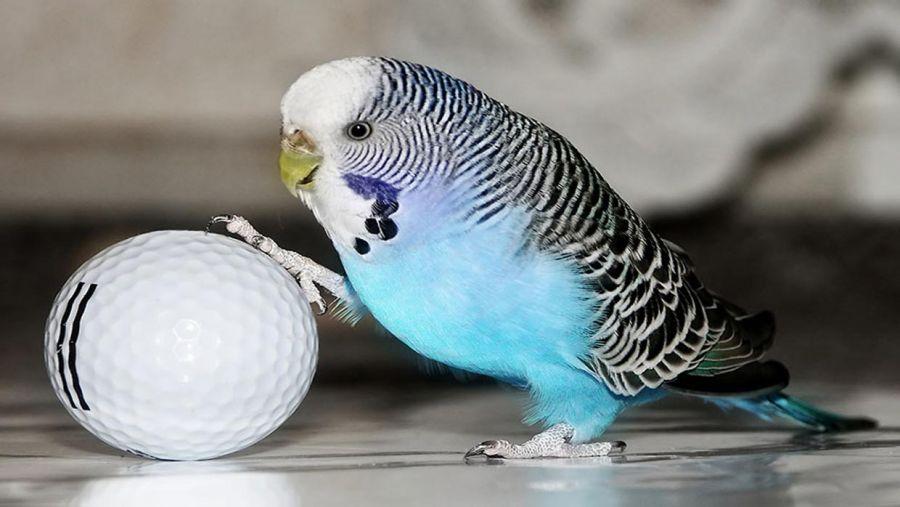 آیا نگهداری از پرندگان خانگی برای انسان خطرناک است؟