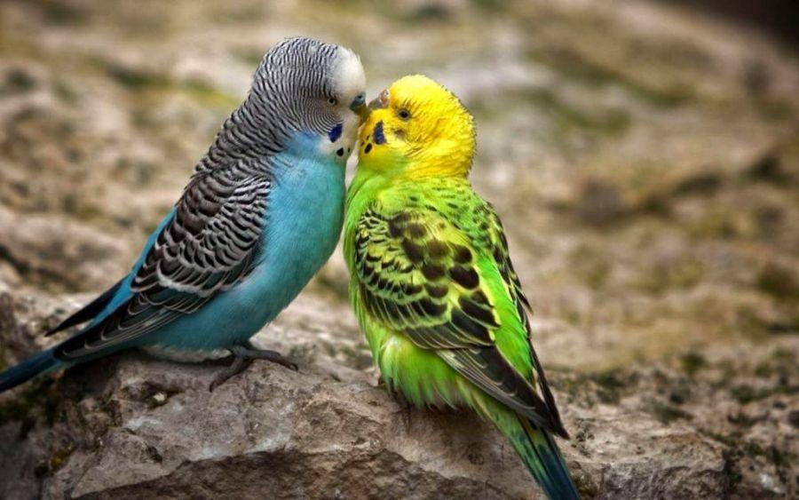 همه چیز در مورد انتخاب بهترین پرنده خانگی