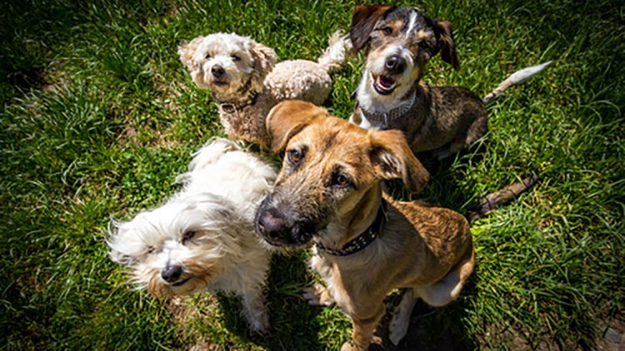 آشنایی با بهترین نژادهای سگ