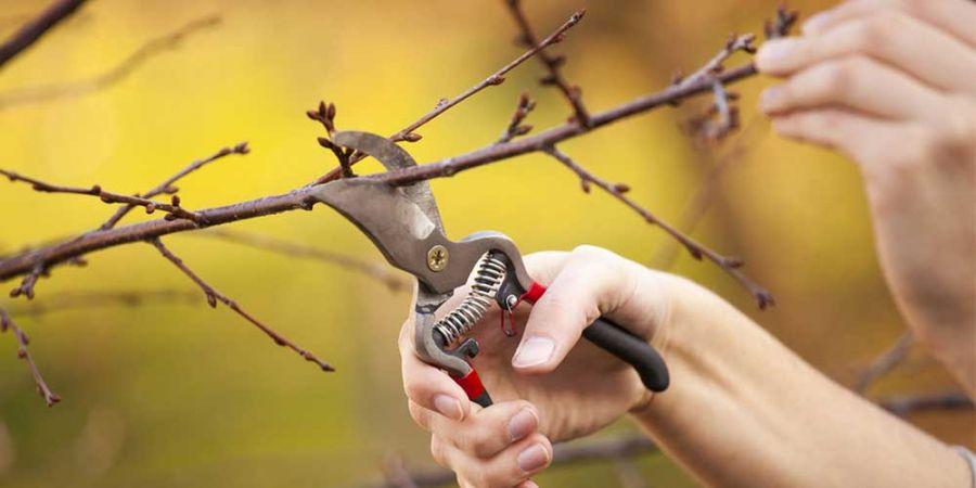 انواع هرس و فواید آن برای درختان