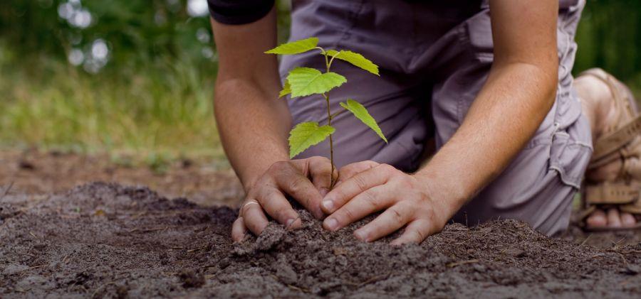 آشنایی با اثرات و فواید درخت و درختکاری