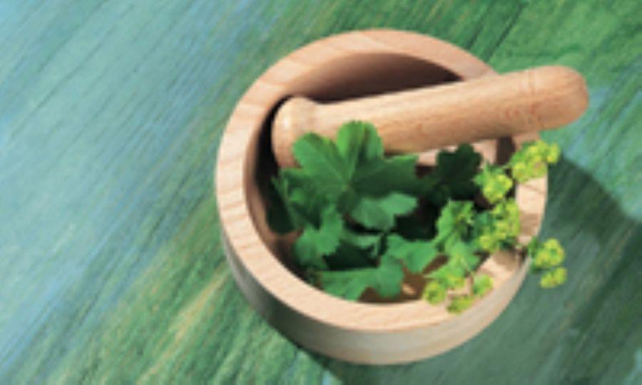 فواید مصرف گیاه دارویی هواچوبه