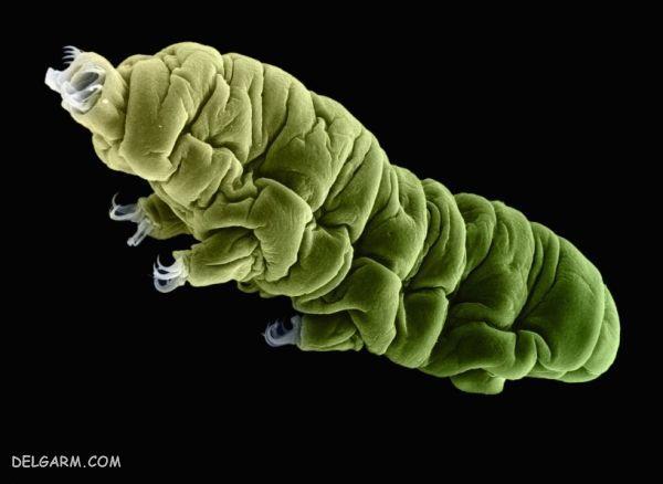 تاردیگرید باکتری