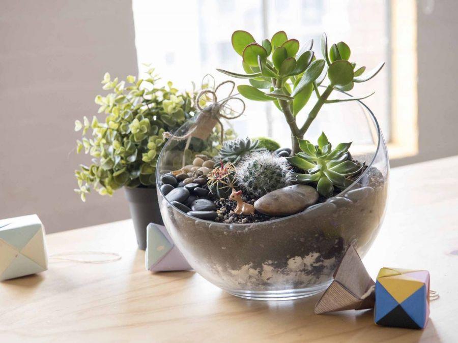 آشنایی با گیاهان مناسب برای تراریوم