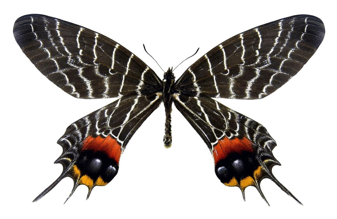 آشنایی با حشرات عجیب