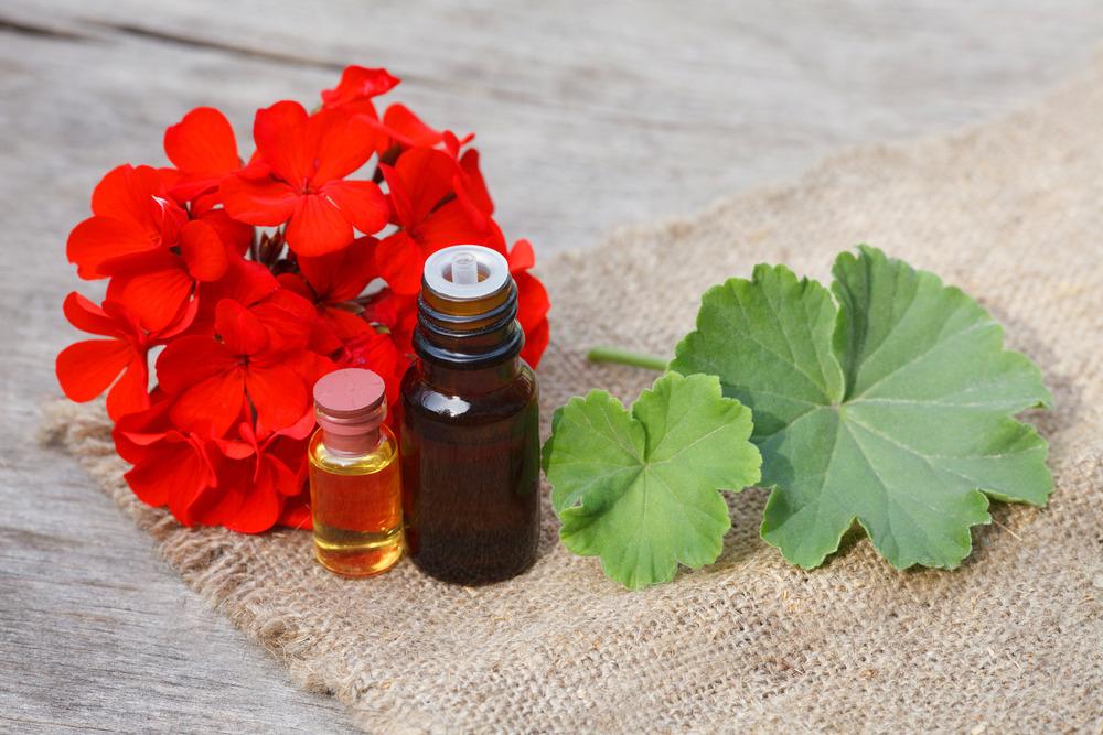 ۳۰ خاصیت اثبات شده روغن شمعدانی برای سلامت بدن