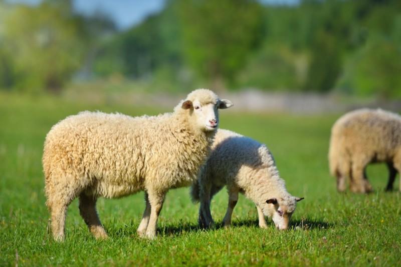 آموزش مرحله به مرحله طرح توجیهی تولید لانولین از پشم گوسفندی