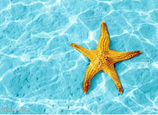 ستاره دریایی کجا زندگی میکند