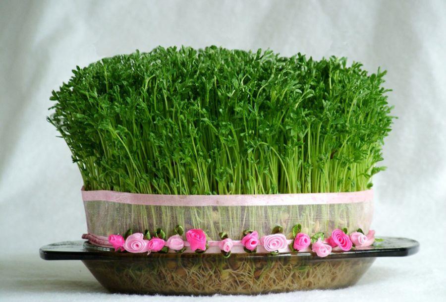 کاشت سبزه با ماش / چگونه در خانه با ماش سبزه بکارم ؟