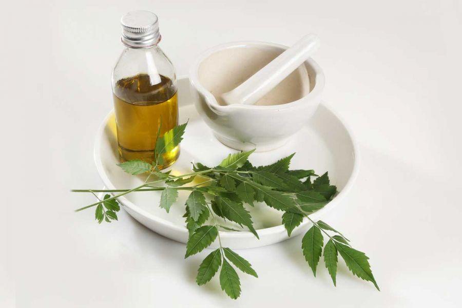 آشنایی با روغن چریش و ۱۲ خاصیت قدرتمند این روغن گیاهی