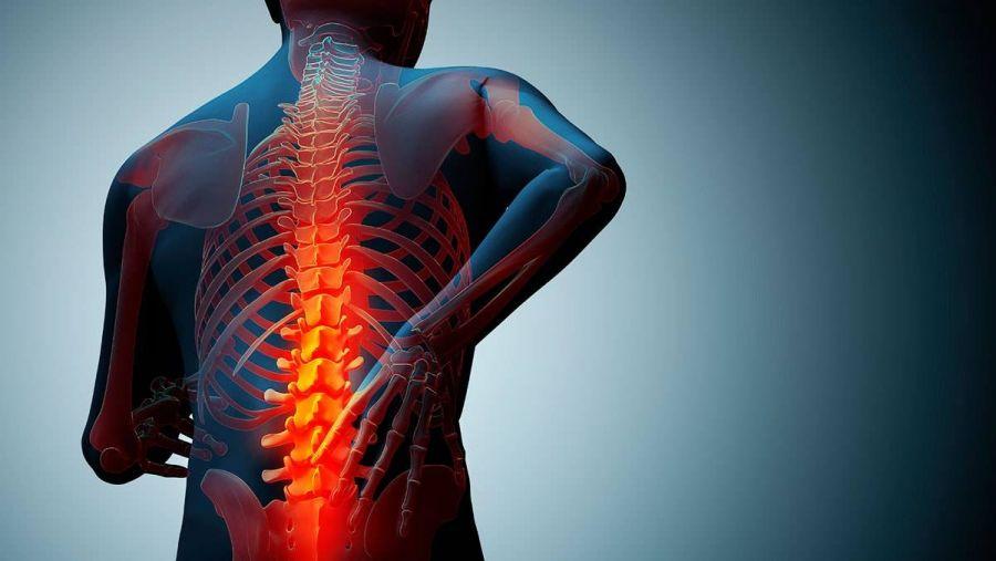داروهای گیاهی پوکی استخوان : درمان قطعی پوکی استخوان در طب سنتی