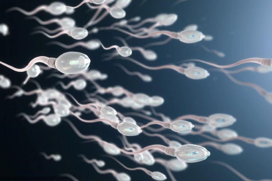 تحرک اسپرم چیست ؟ تحرک اسپرم چگونه بر روی باروری تاثیر می گذارد ؟