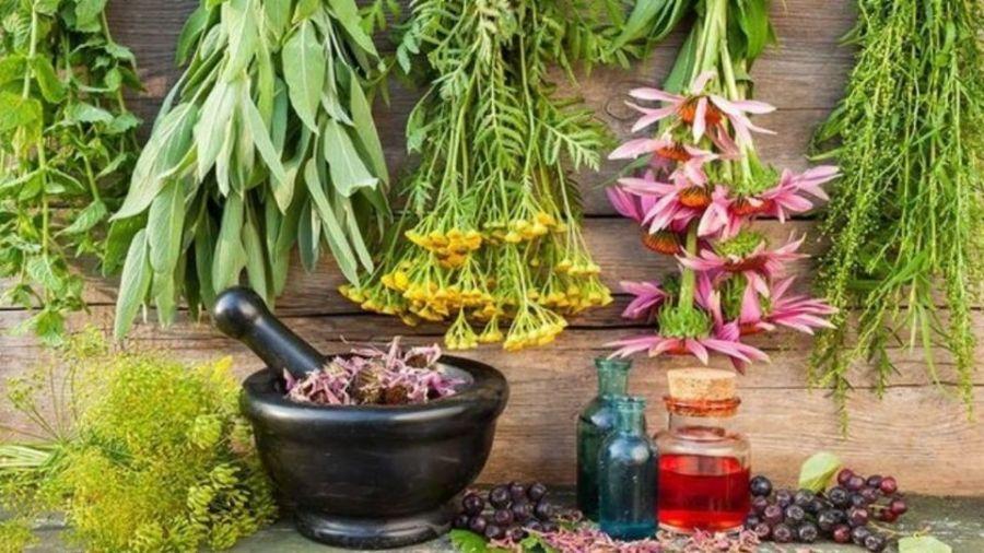 درمان افسردگی با پرمصرف ترین داروهای ضد افسردگی گیاهی