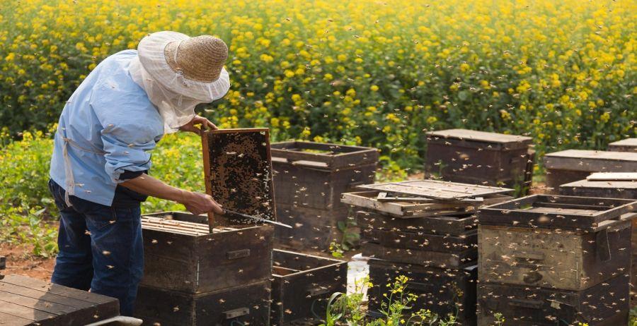 زنبورداری : آشنایی کامل با شغل و درآمد زنبور داری