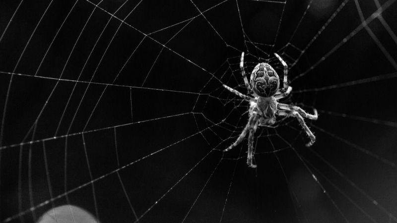 ۲۵ نشانه و تعبیر دیدن عنکبوت در خواب