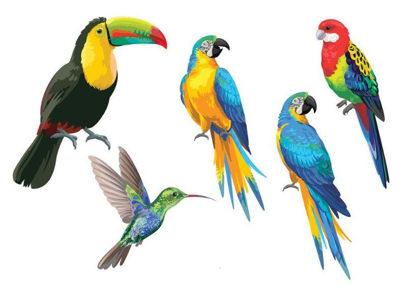 دیدن پرنده در خواب چه تعبیری دارد و نشانه چیست ؟
