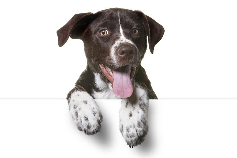 ۱۲ تعبیر و نشانه دیدن سگ خانگی و سگ وحشی در خواب