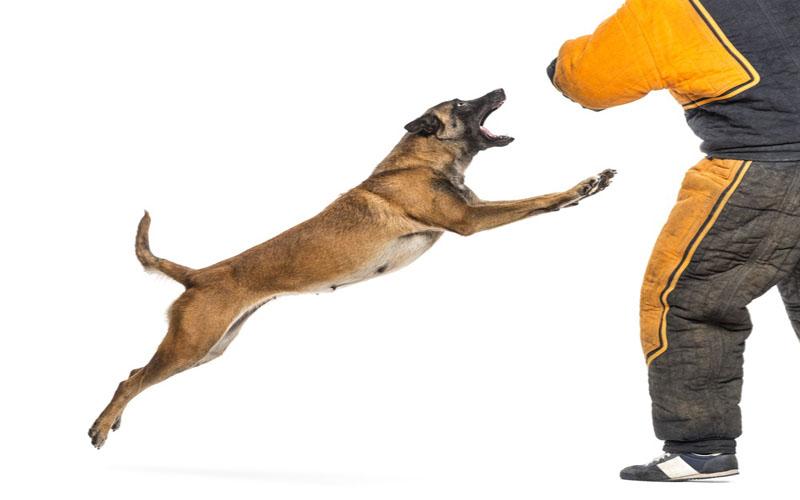 تعبیر و نشانه دیدن حمله سگ در خواب  چیست ؟