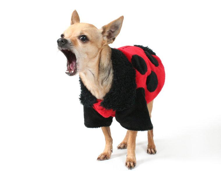 صدای پارس سگ در خواب نشانه چیست و چه تعبیری دارد ؟