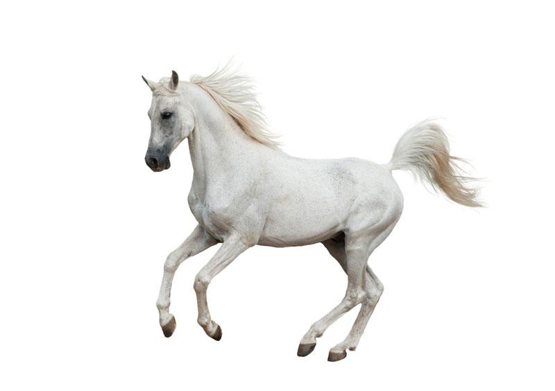 تعبیر خواب اسب : دیدن اسب در خواب نشانه چیست ؟