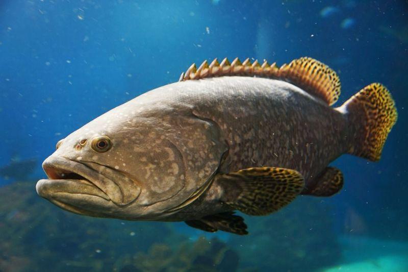 دیدن ماهی کوچک و بزرگ در خواب نشانه چیست ؟