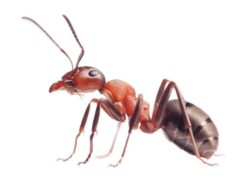 دیدن مورچه در خواب نشانه چیست ؟