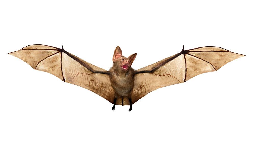 تعبیر و تفسیر دیدن خفاش در خواب چیست ؟