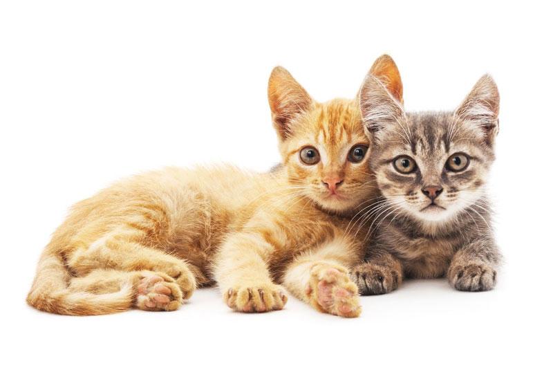 تعبیر و تفسیر دیدن گربه در خواب چیست ؟