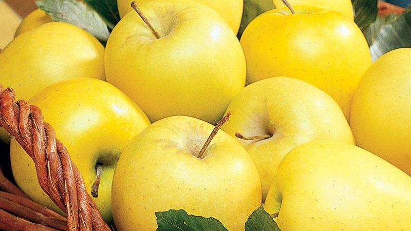 قیمت و صادرات سیب هر دو با هم افزایش یافت!