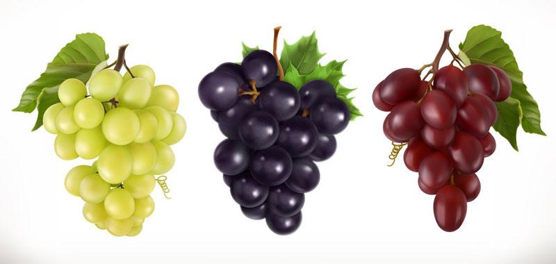 تعبیر و تفسیر دیدن انگور در خواب چیست ؟